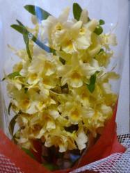 20110402花~♪2