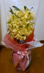 20110402花~♪
