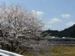 20110412さくら~♪と電車
