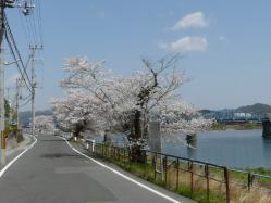 20110412さくら~♪2