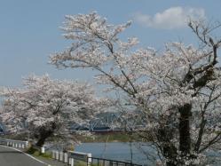 20110412さくら~♪3