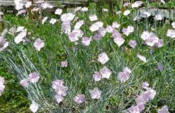20110524花~♪
