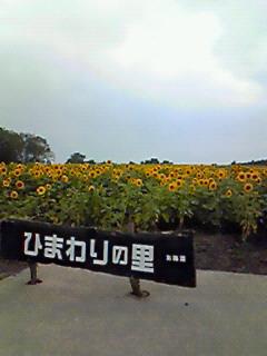 向日葵の里