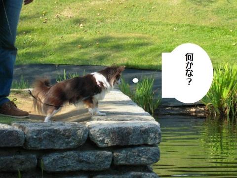 DSCN9984 小田原F