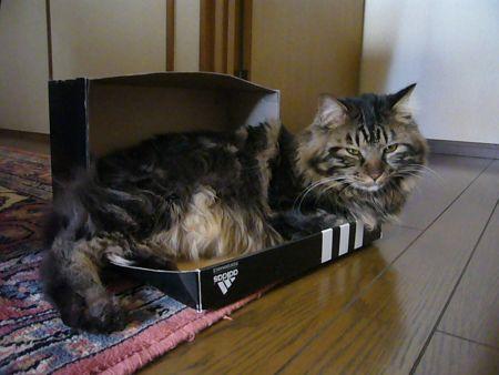 猫ご満悦^^