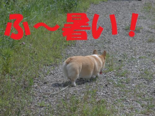 001-1_convert_20120716201951.jpg