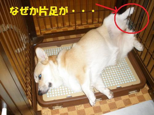 001_convert_20120806231359.jpg