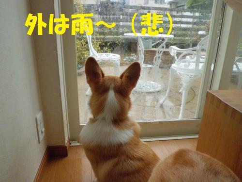 002_convert_20121117132340.jpg