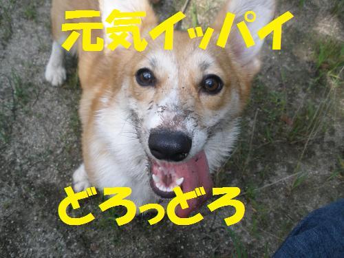 007_convert_20120709214318.jpg