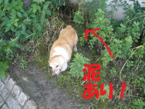 011_convert_20120709214411.jpg