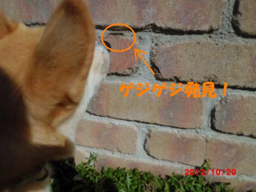 025_convert_20121020221511.jpg