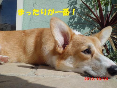 033_convert_20121020222726.jpg