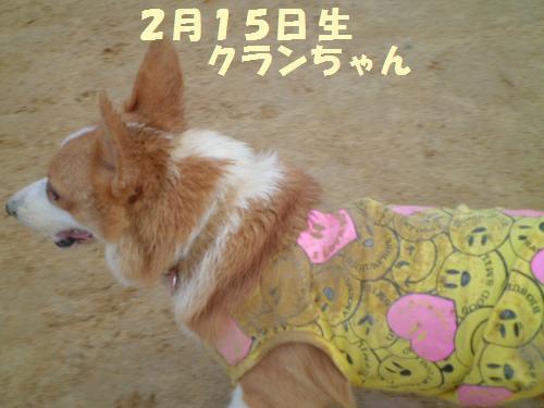 107-1_convert_20121204215315.jpg