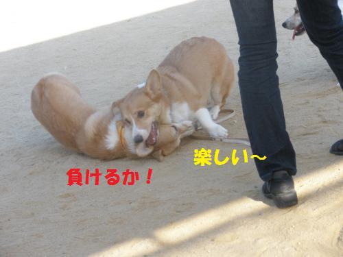 135_convert_20121014221311.jpg