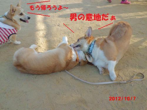 138_convert_20121014221504.jpg