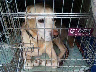 囚犬(人)1