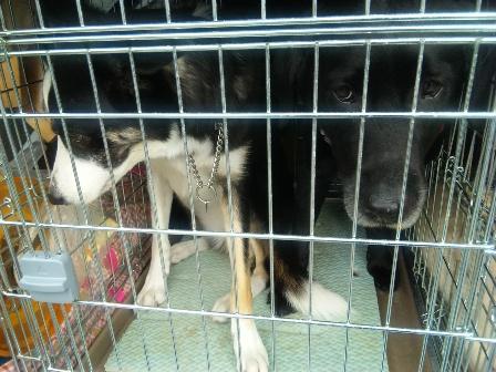 囚犬(人)2
