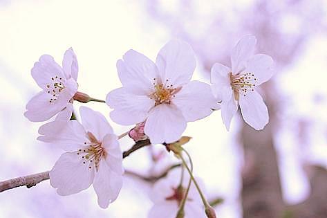 桜の季節に♪