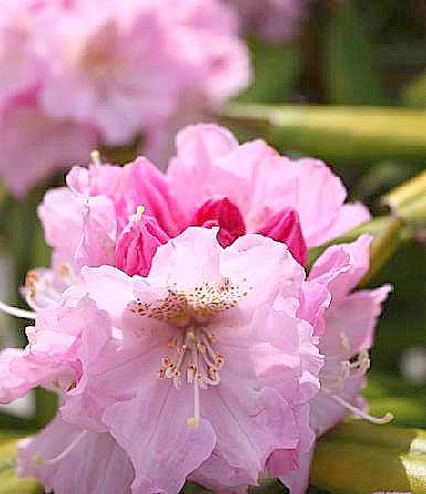 石楠花でした♪
