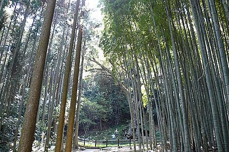 竹と杉の林の向こうに♪