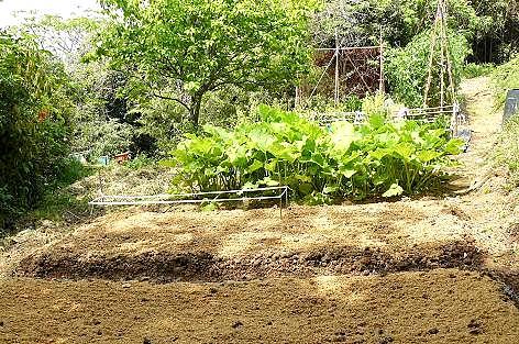 畑の下段に植えたのは♪