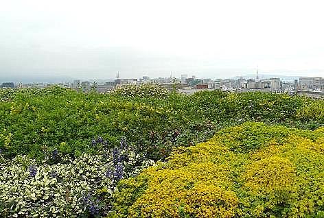 屋上の花壇♪