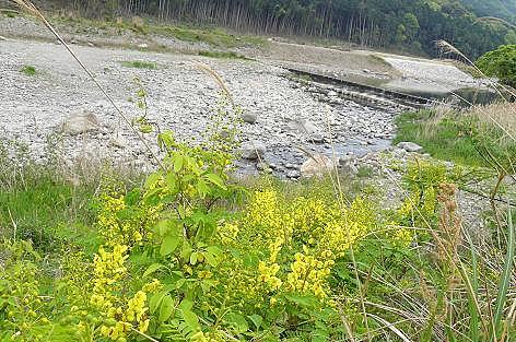 黄色い花の群生♪