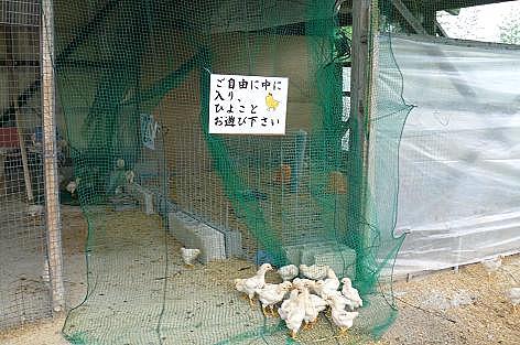 ヒヨコ小屋♪