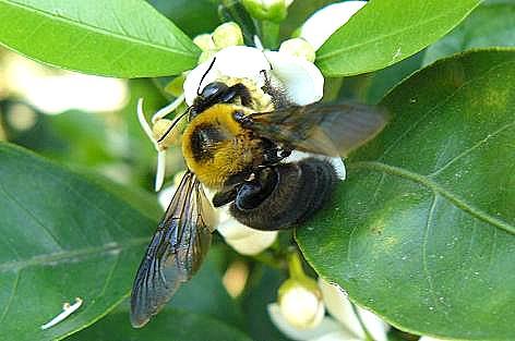 蜂さんだらけ♪