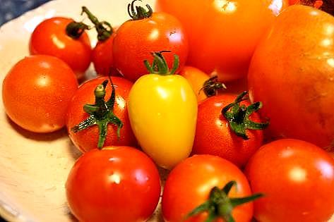 フルーツトマトとアイコ♪