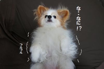 001_20110825192646.jpg