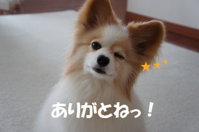 0040_20110620185442.jpg