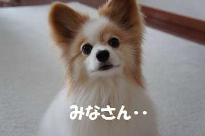 005_20110620185441.jpg