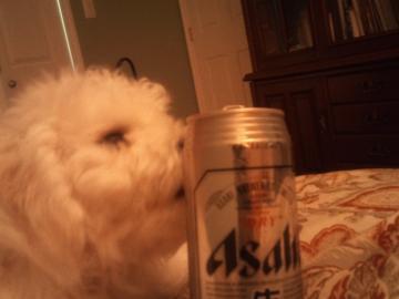 ビール&ネージュ