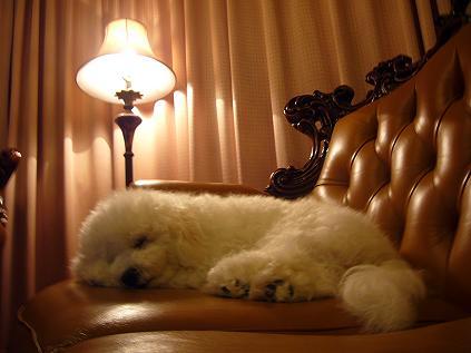 on sofa0