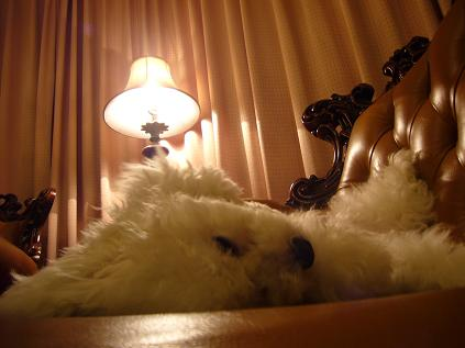 on sofa2