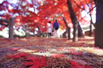 MORIOKATYUUOU10101310.jpg
