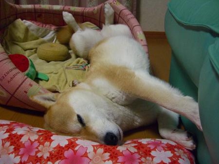 座布団&ベッド