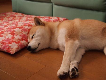 リビングで寝んね