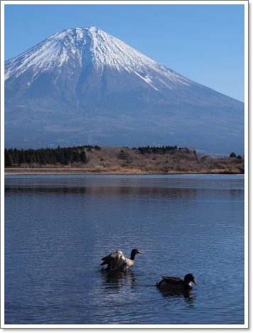 田貫湖と鳥さんと