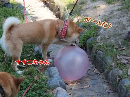 ボール発見ナナコちゃん