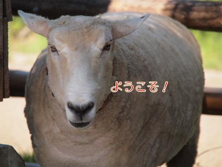 羊さんとうさぎさんの公園