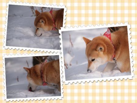 雪を食べる!