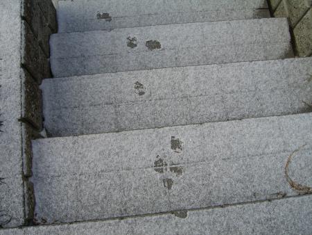 さくらの足跡