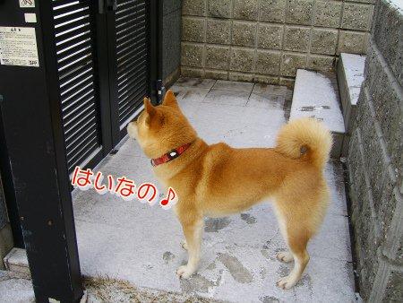 いざお散歩~