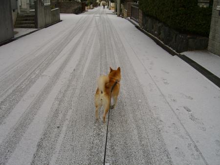 道路が白い~