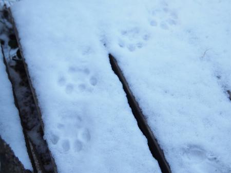 可愛い足跡!