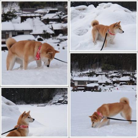 雪に埋没!?
