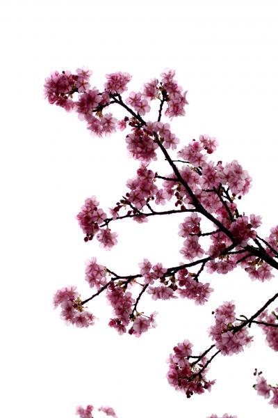 IMG_8251_convert_20110225130528.jpg