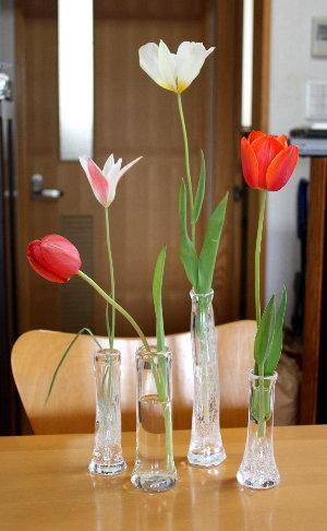 tulipglass1104.jpg